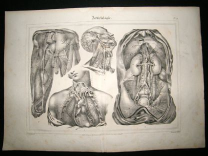 Anatomy Print: 1835 Arteries etc, Folio. | Albion Prints